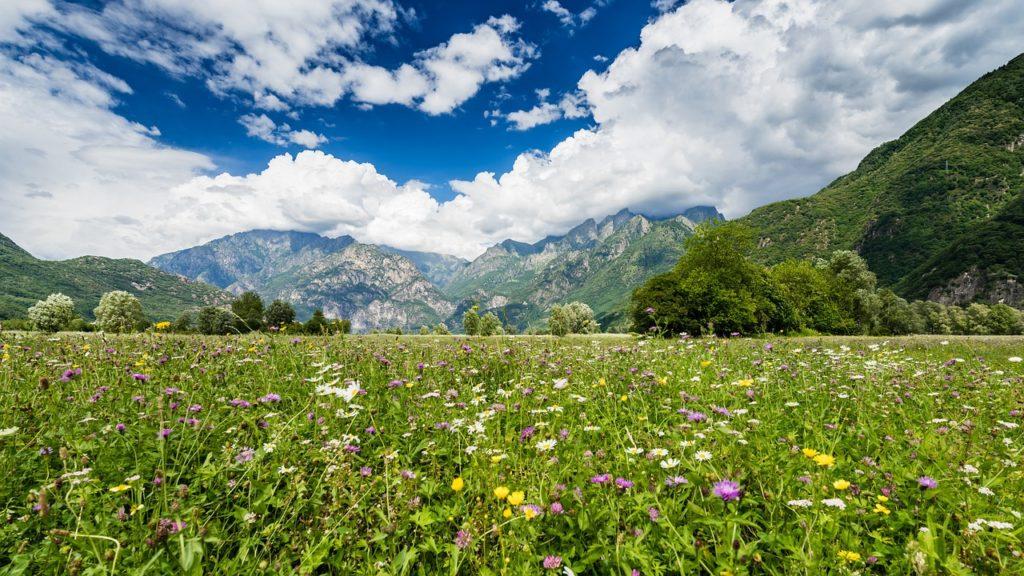 Vakkert landskap fra alpene i italia lombardia valtellina, valtellina-dalen i italia med blomstereng